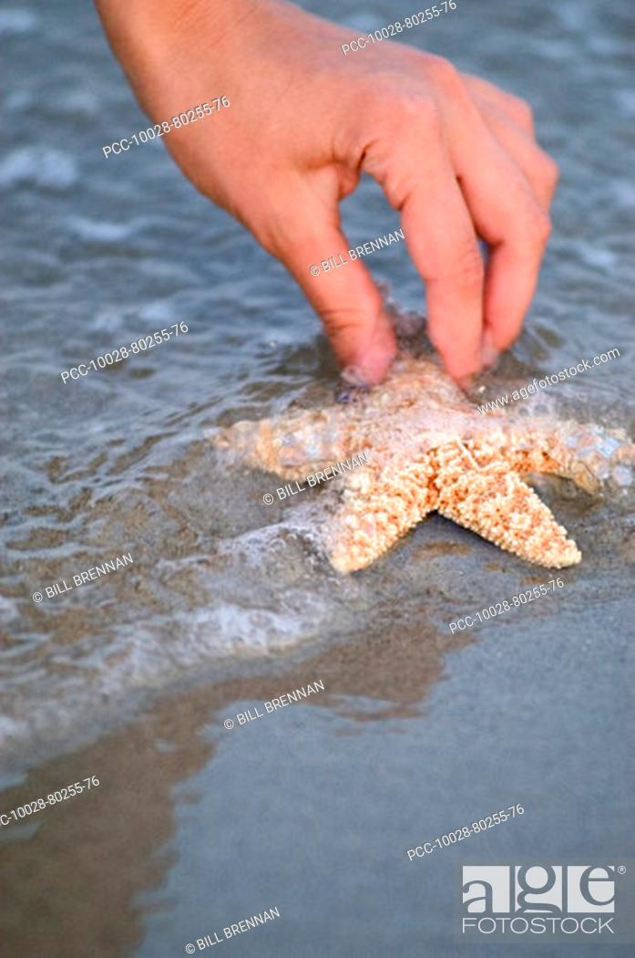 Stock Photo: Close-up of hand picking up starfish from water at beach.