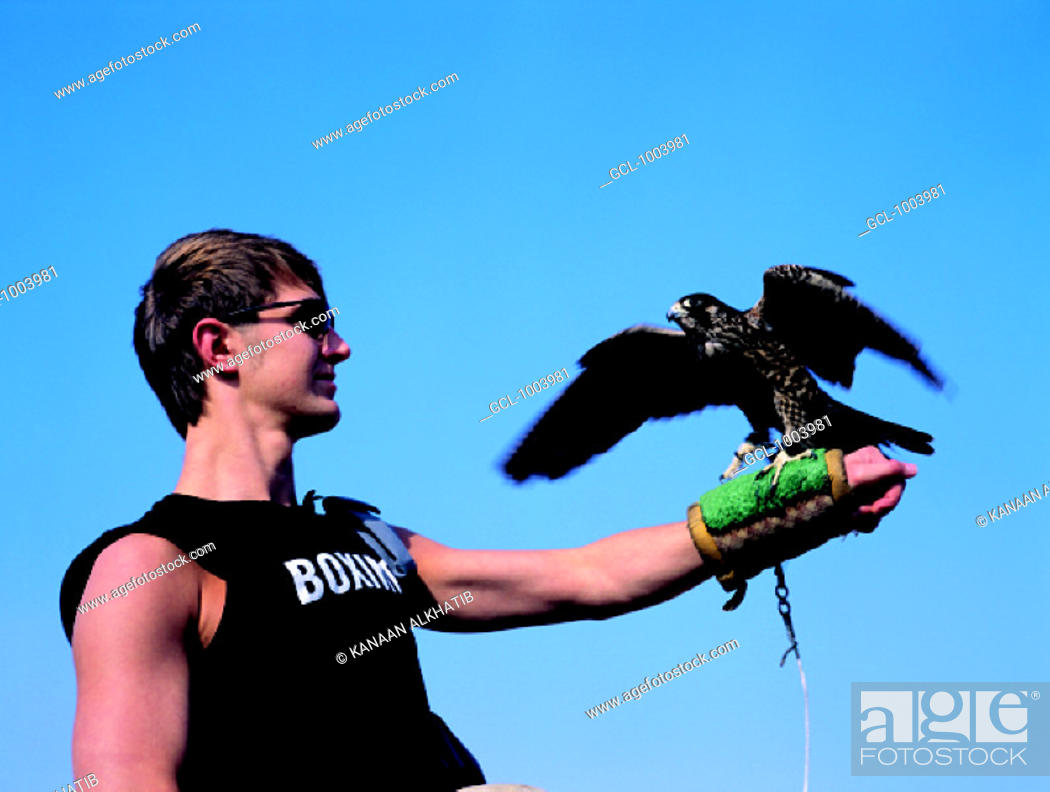 Stock Photo: Western tourist holding a falcon on his gloved arm, United Arab Emirates.