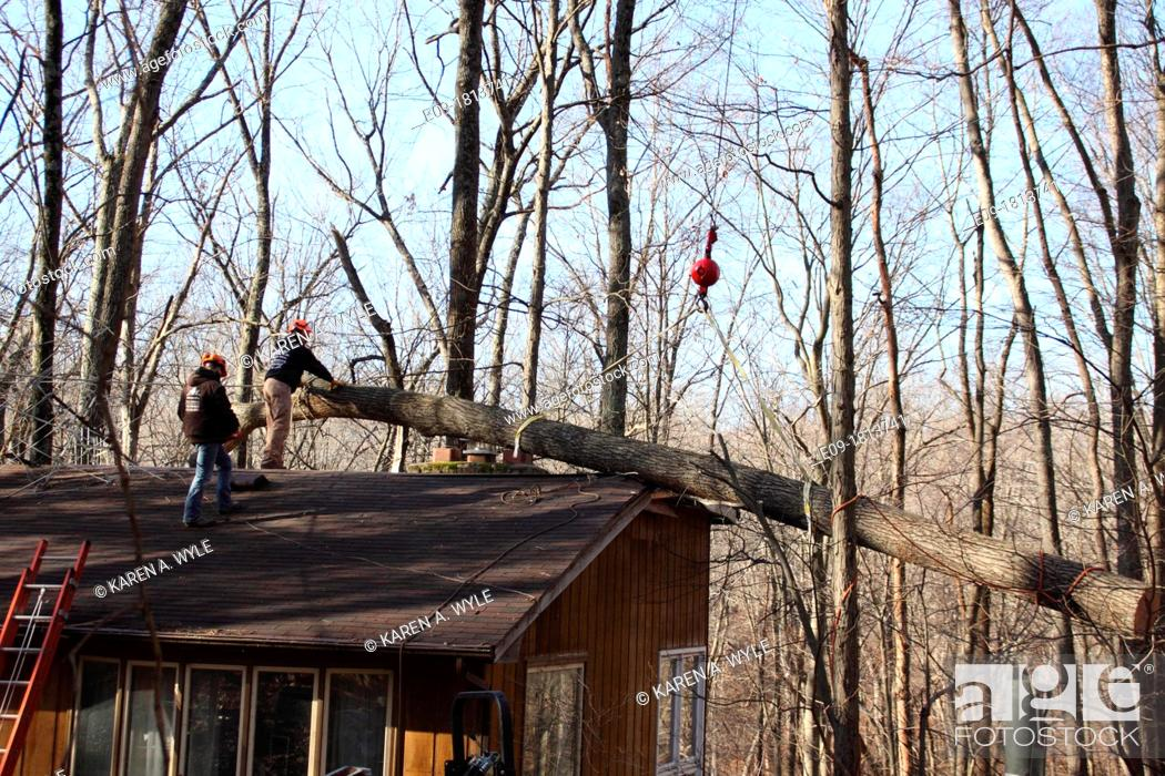 Stock Photo: workers in orange hard hats on roof of house helping remove fallen tree from roof, attaching crane hook to tree, damage to structure visible, winter forest.