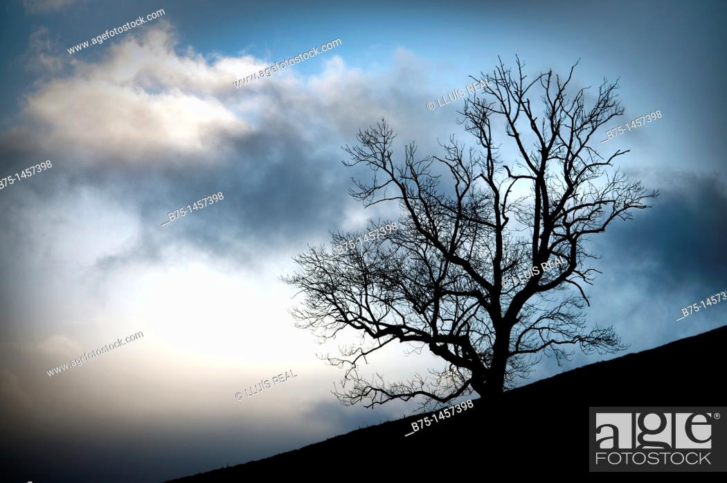 Stock Photo: England, Yorkshire Dales, countryside clouds and tree,.