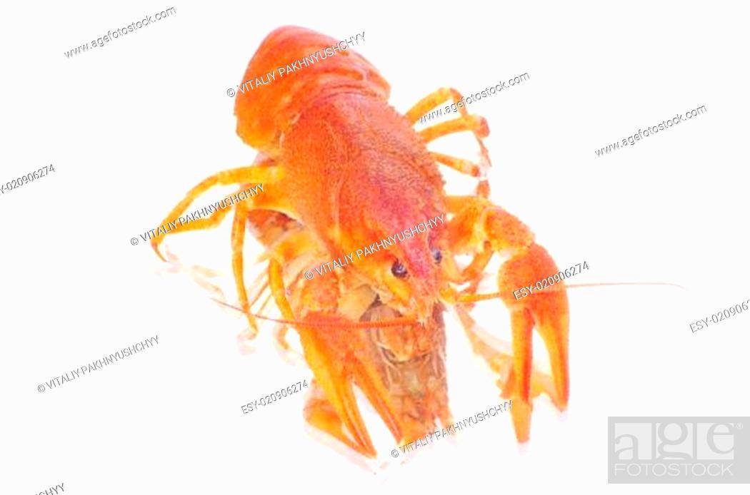 Stock Photo: crayfish.