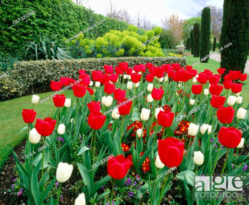 Spring Flowers In The Regents Park Gardens London England Uk