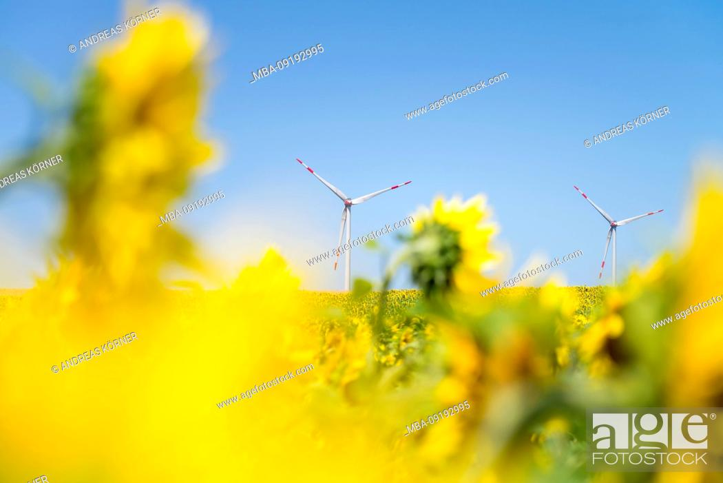 Stock Photo: Wind turbines in the sunflower field under blue sky.