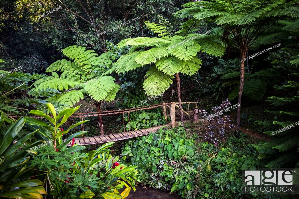 Stock Photo: Jungle with bridge in Topes de Collantes, Trinidad, Republic of Cuba, Caribbean, Central America.