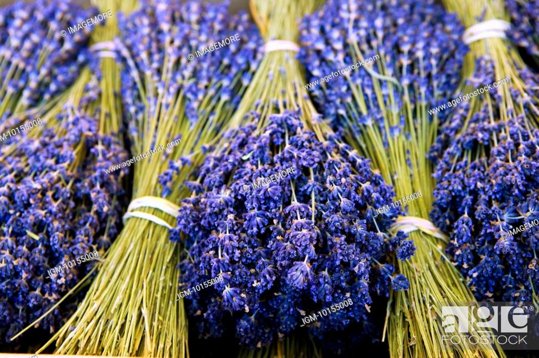 Stock Photo: Bunches of Lavender flowers, France, Nice.