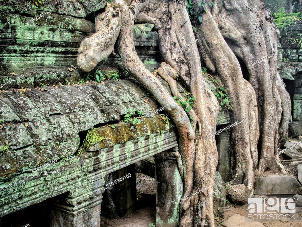 Stock Photo: Ta Prohm Temple.