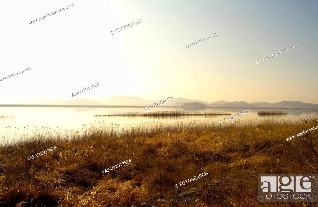 Stock Photo: eulalia, river, plant, scenery, nature, plants, sunrise.