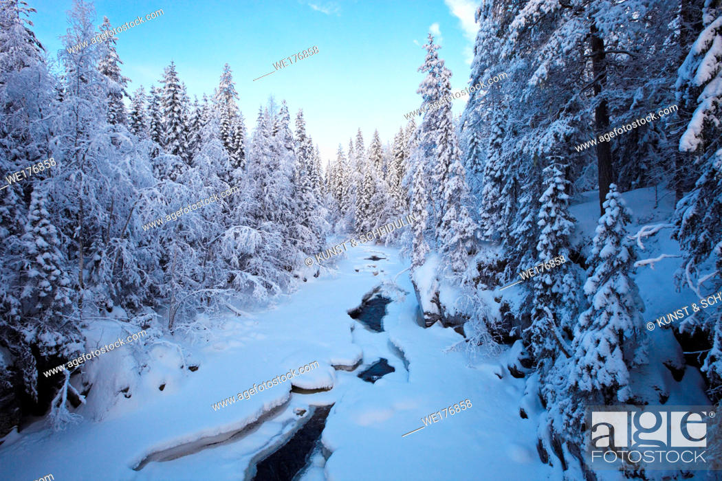 Stock Photo: River flowing through snowy forest.