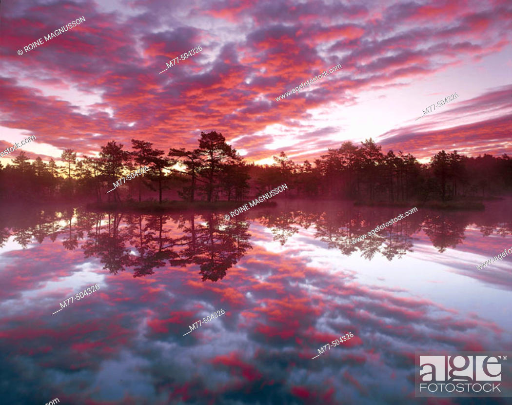 Stock Photo: Lake, island, Pine trees (Pinus sylvestris), clouds, colours, calm lake. Knuthöjdsmossen. Västmanland. Sweden.