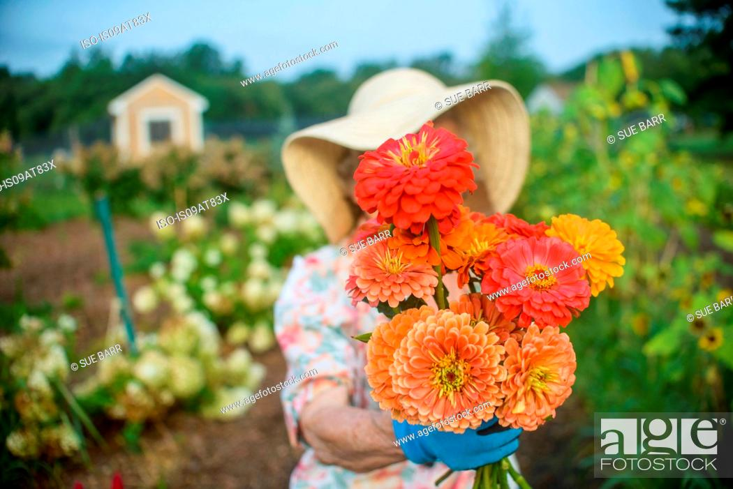 Stock Photo: Senior woman holding flowers in front of face on farm.