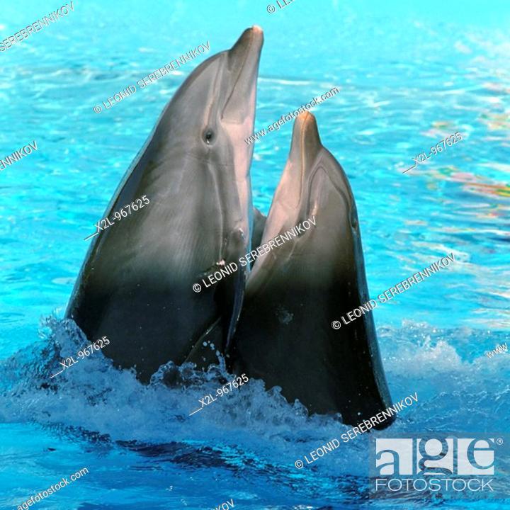 Stock Photo: Dolphins dancing lambada in Zoomarine amusement park  Algarve, Portugal.