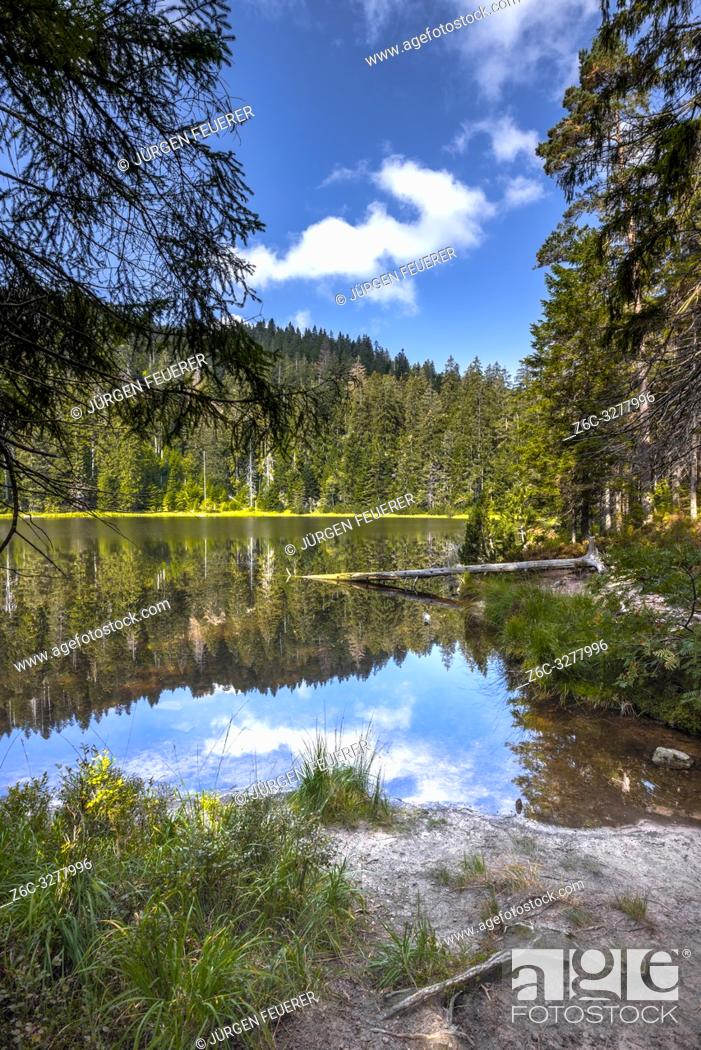 Imagen: natural scene of the Wildsee, Ruhestein; Baiersbronn in the Black Forest, Germany, protected nature reserve and National Park.