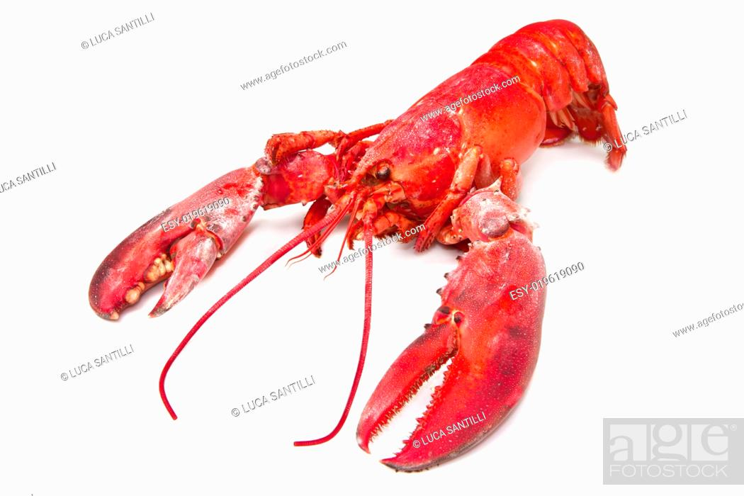 Stock Photo: lobster.