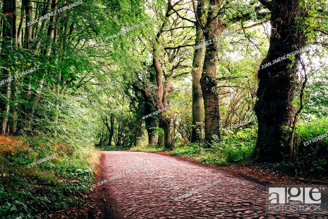 Stock Photo: Lonely pathway in beech woodland in Rugen Island. Germany.