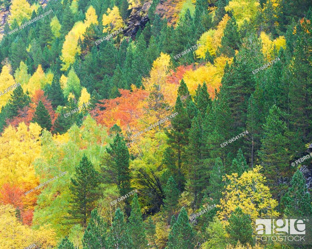 Stock Photo: Autumn in Ordesa National Park, Pyrenees, Huesca, Aragon, Spain.