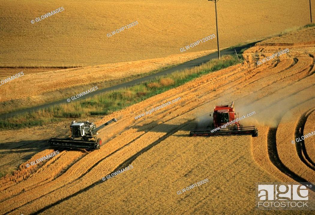 Stock Photo: Harvesting golden wheat, Washington state.