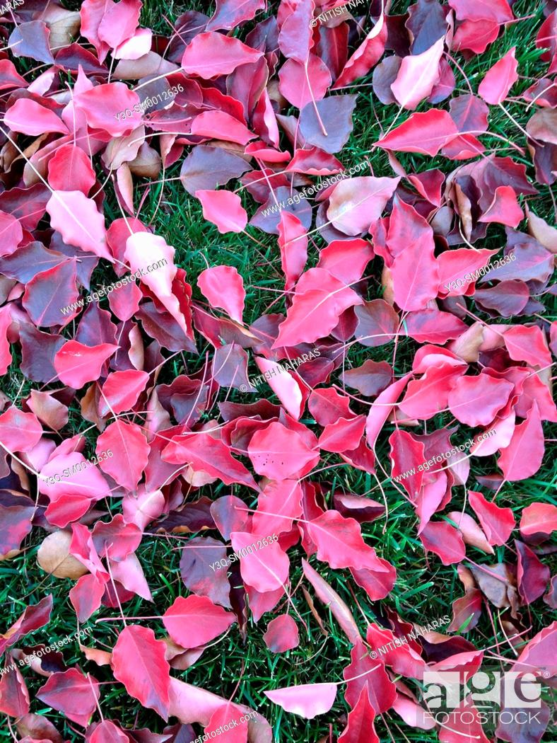 Stock Photo: Leaves on the grass in fall season.