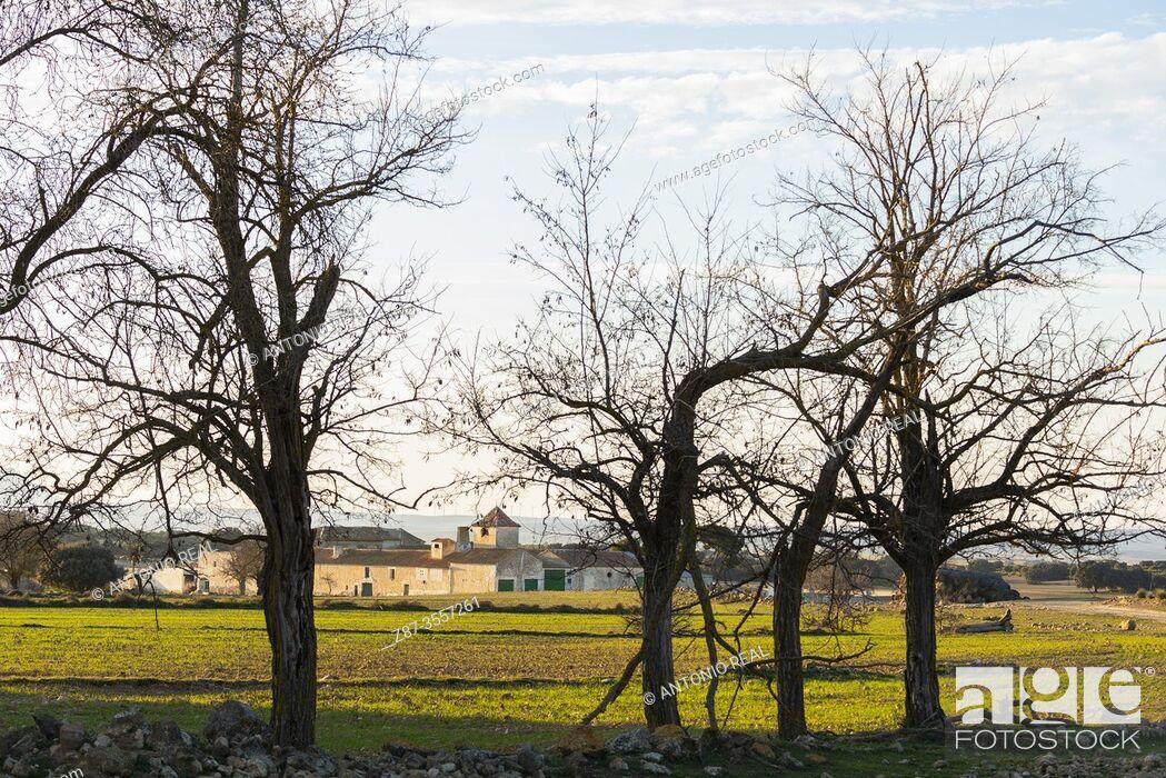 Imagen: Almond trees. Paraje de Botas, Almansa, Albacete province, Castile-La Mancha, Spain.