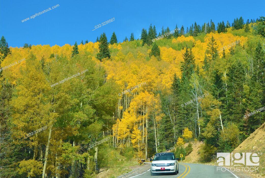 Stock Photo: Aspens turning golden, Santa Fe National Forest, New Mexico.