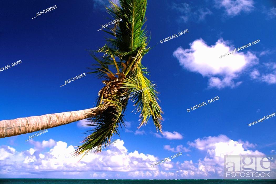 Stock Photo: Caribbean - Dominican Republic - Punta Cana - Playa Bavaro.