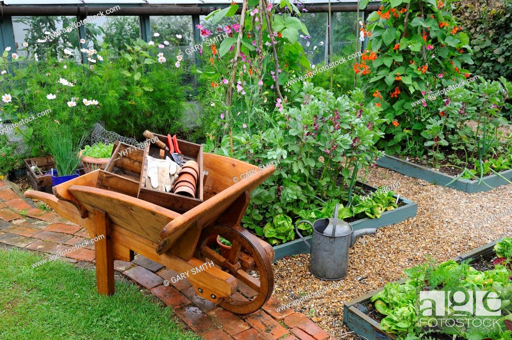 Stock Photo: View of small vegetable garden in summer after rain shower, with wooden wheelbarrow raised beds of runner beans and broad beans and salad crops, England, July.