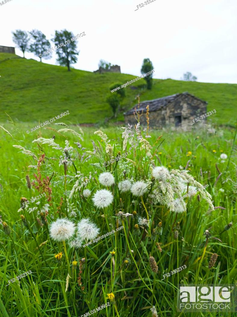 Photo de stock: Spring landscape of pasiegas cabins and meadows in the Miera Valley in the Autonomous Community of Cantabria. Spain, Europe.