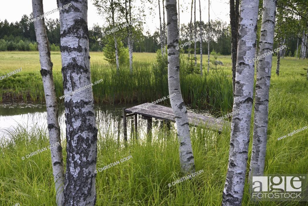 Photo de stock: small lake on the homestead, Miskiniskes rural accommodations, Aukstaitija National Park, Lithuania, Europe.