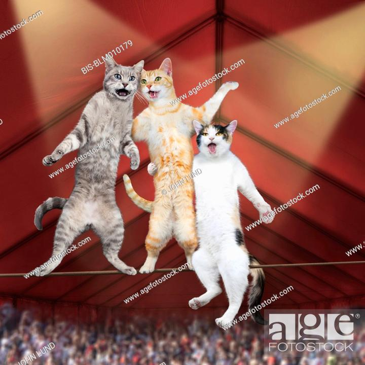 Stock Photo: Cats singing and balancing on tightrope.