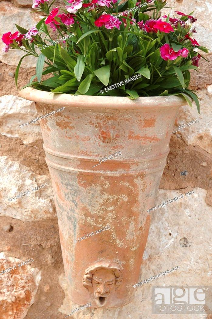 Stock Photo: Carnations in a terracotta pot.