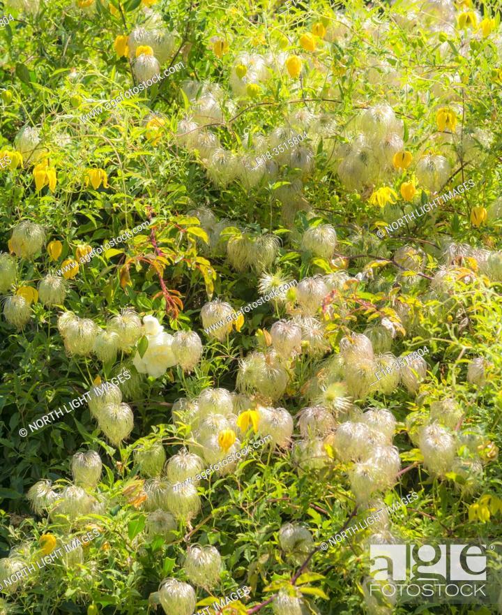 Imagen: Canada, BC, Victoria. Colorful flower garden in British Columbia's capital city.