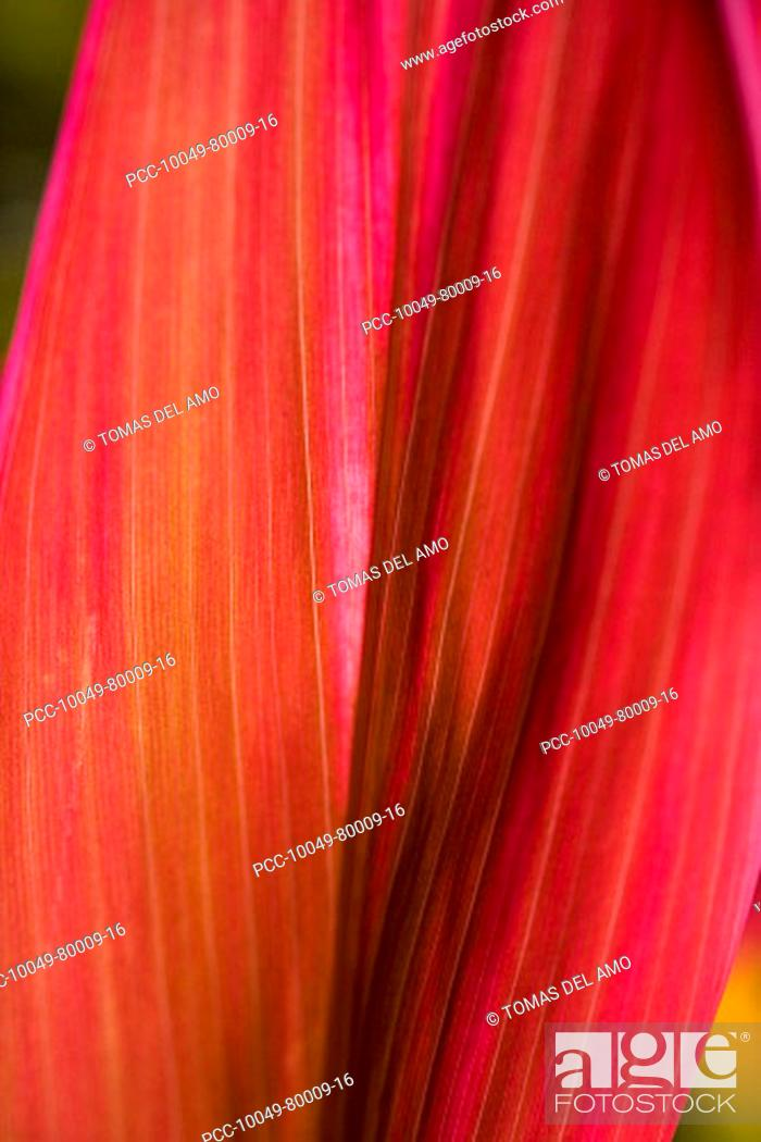 Stock Photo: Close-up of a bright red leaf.