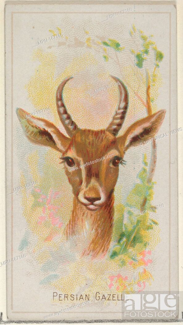 Imagen: Persian Gazelle, from the Wild Animals of the World series (N25) for Allen & Ginter Cigarettes. Publisher: Allen & Ginter (American, Richmond.
