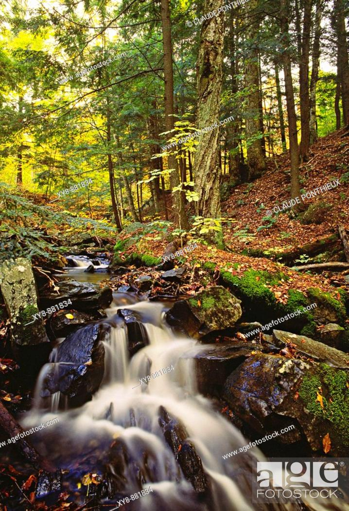 Stock Photo: Forest-and-Stream.