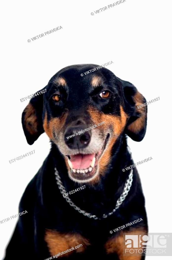 Stock Photo: Funny mixed breed dog.