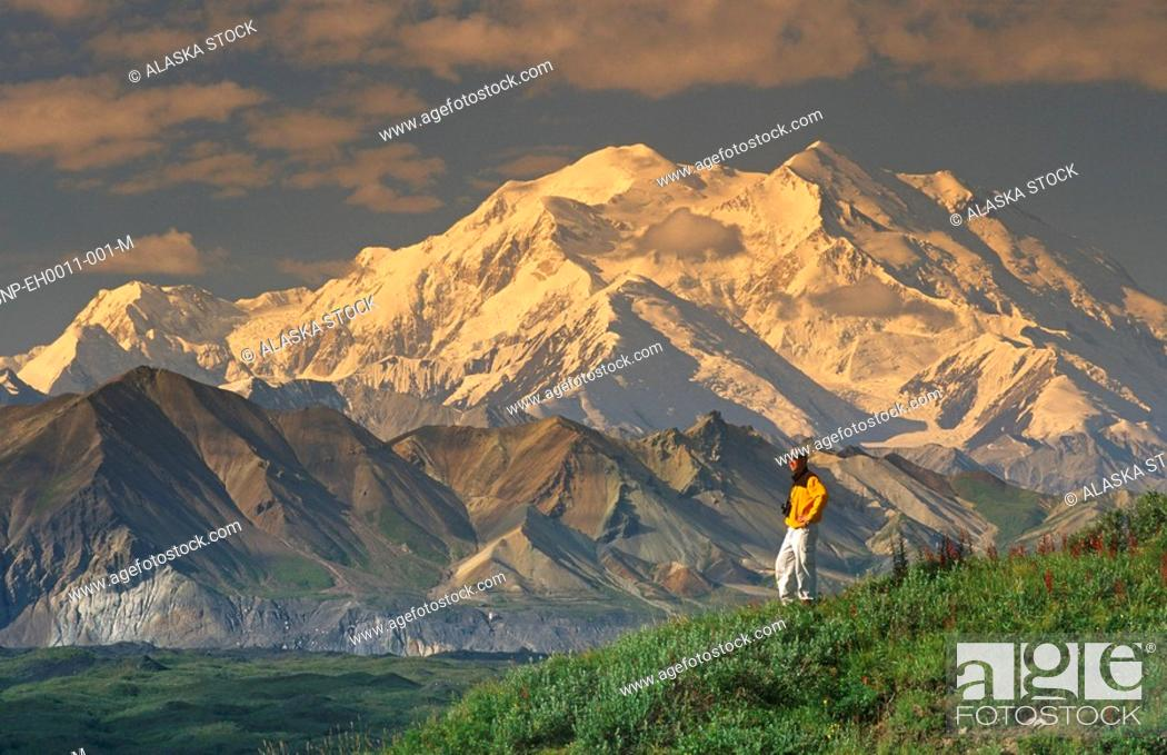 Photo de stock: Man Hiking on Tundra w/Mt McKinley Denali NP IN AK Summer.