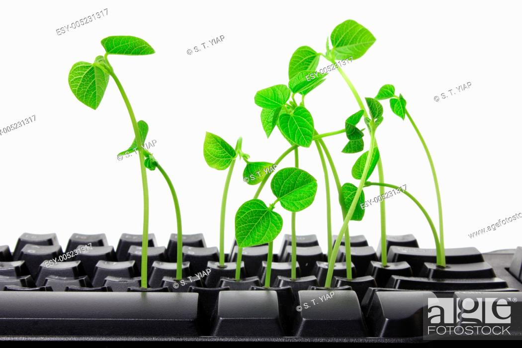Stock Photo: Keyboard with Sprouts on White Background.