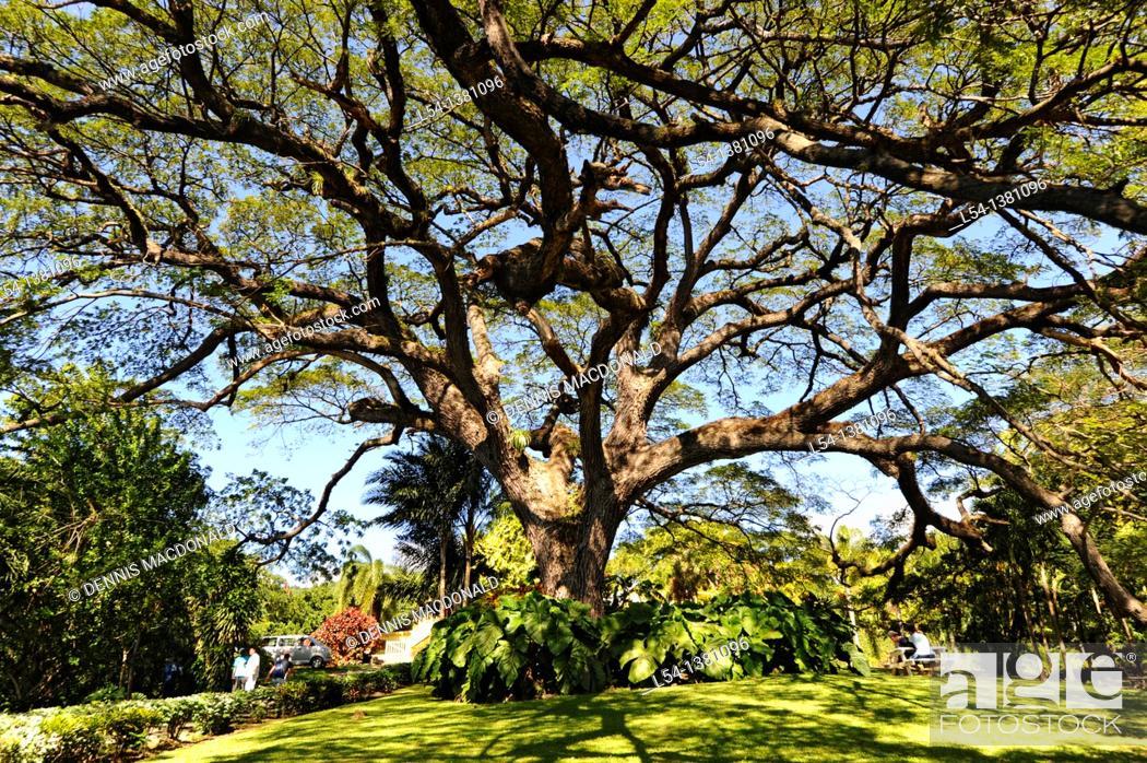 Stock Photo: Romney Manor Botanical Gardens Basseterre St  Kitts Caribbean Island Cruise NCL.