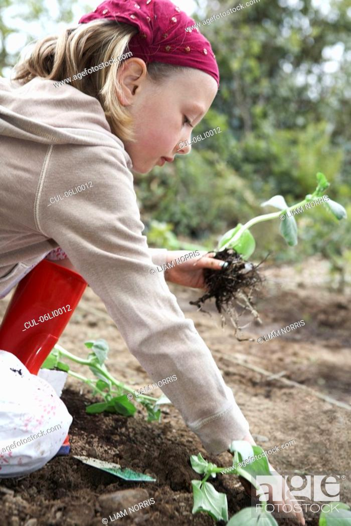 Stock Photo: Young girl planting vegetables.
