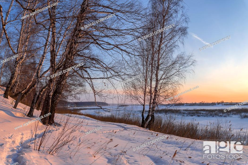 Imagen: Birch trees on the edge of a snow-covered river valley on a winter evening.