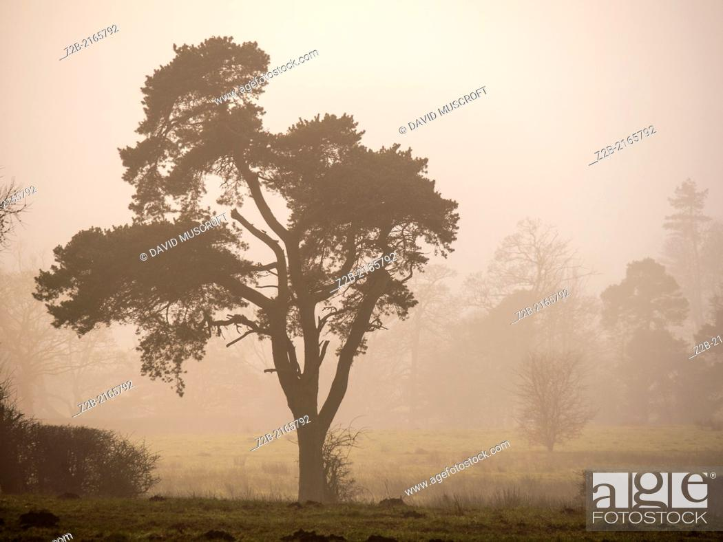 Stock Photo: Trees in misty winter weather.