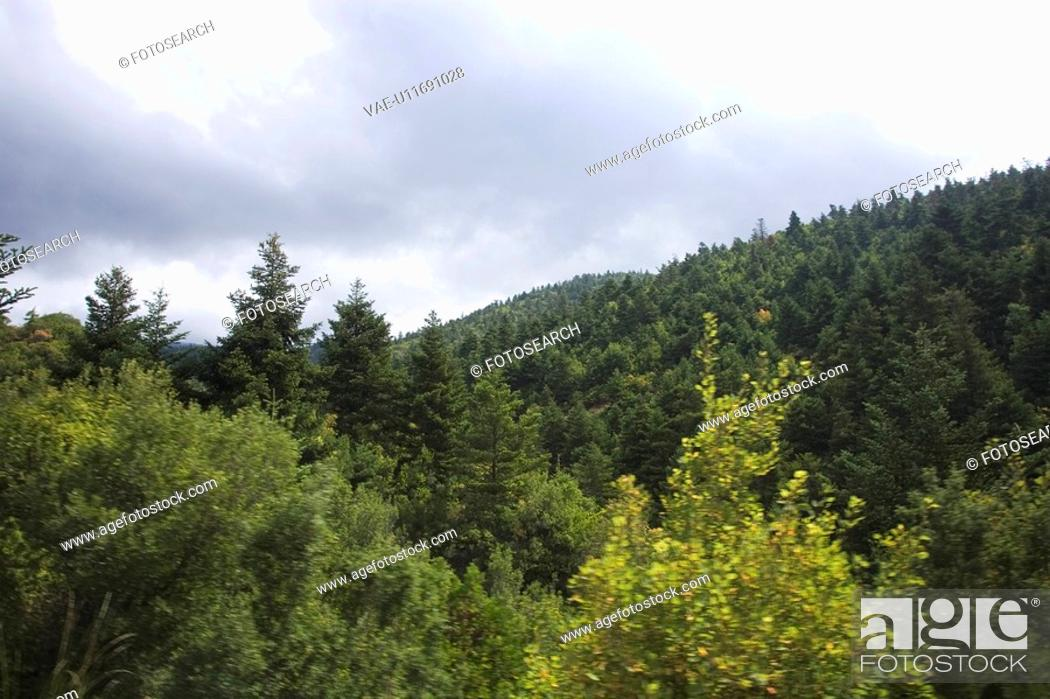 Stock Photo: Cloud, Day, Dense, Forest, Generic Location.