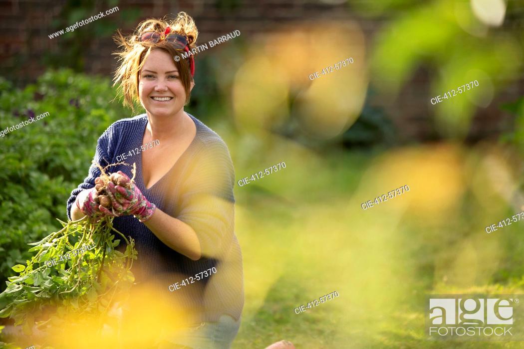 Stock Photo: Portrait happy confident woman harvesting fresh potatoes in garden.