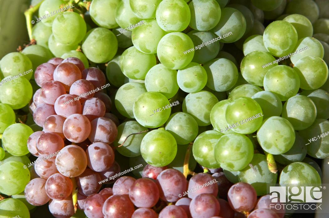 Stock Photo: Niagara and Delaware grapes of the Finger Lakes region of New York State in September 2006.