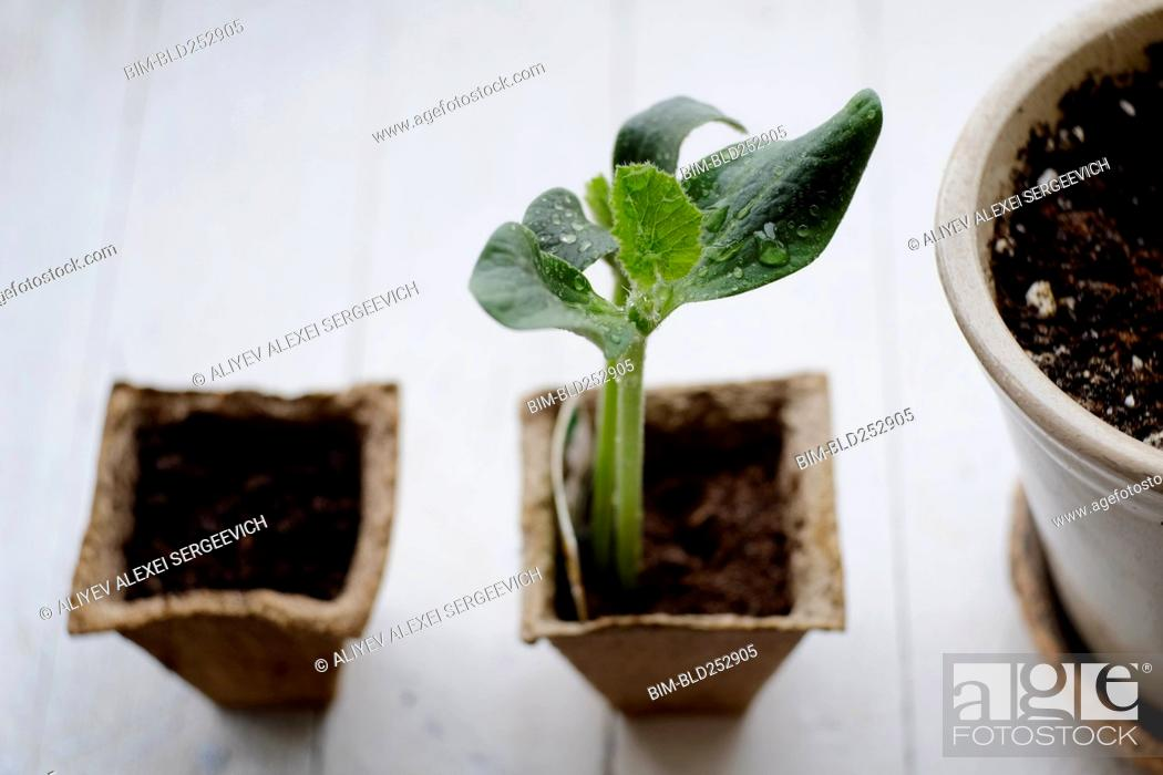 Stock Photo: Water droplets on seedling.