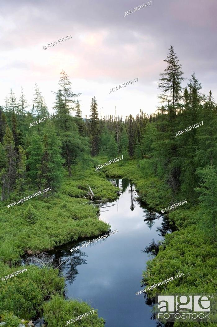 Stock Photo: Boreal forest and wetlands along the Labrador Coastal Drive, east of Red Bay, Labrador, Newfoundland and Labrador, Canada.