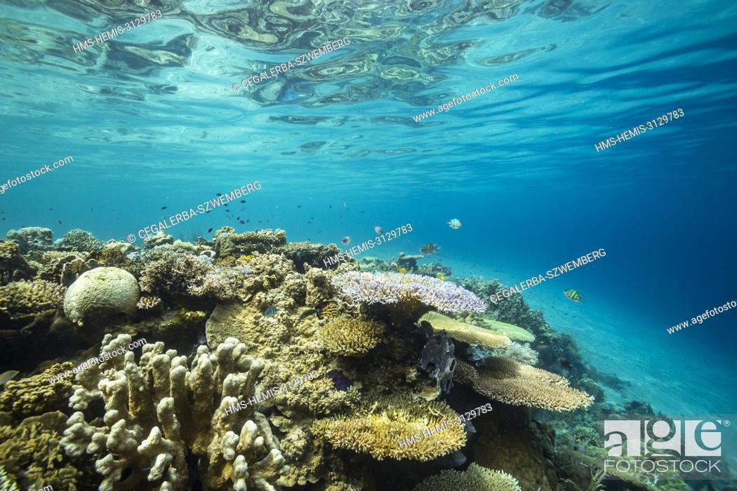 Stock Photo: Philippines, Palawan, Taytay Bay, Isla Blanca, coral reef.