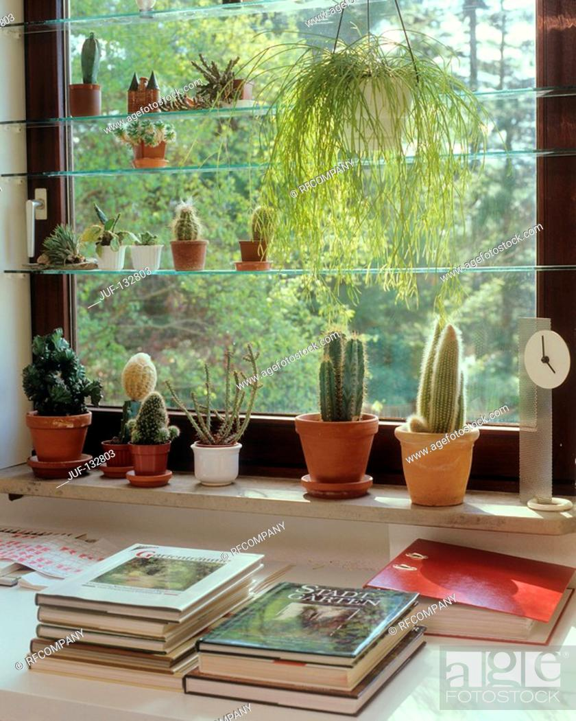 Stock Photo: different cacti at window.