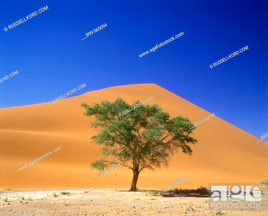 Stock Photo: Scenic Tree, Sand Dune, Sossusvlei, Namib-naukluft Desert Park, Namibia.