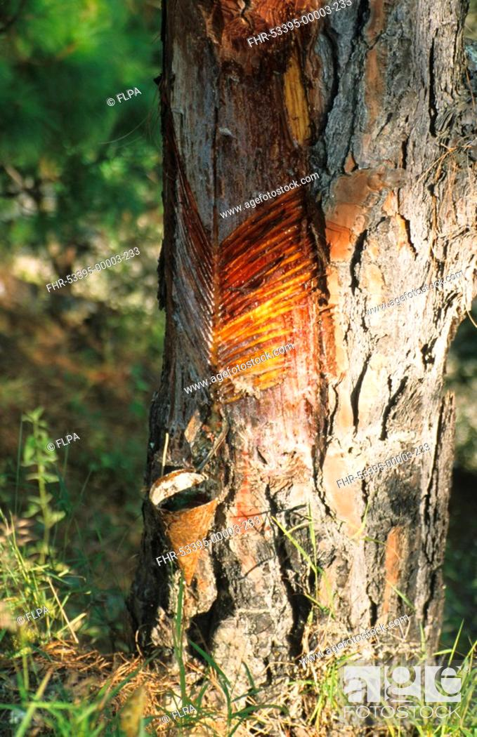 store Pinus pics www XXX vedeio