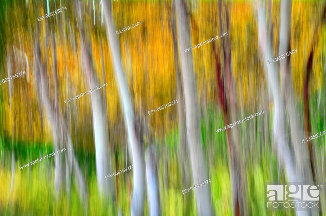 Imagen: blurred forest.